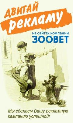 Реклама ветеринарного центра Зоовет