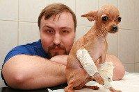 Переломы у животных