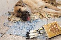 Эпилепсия собак