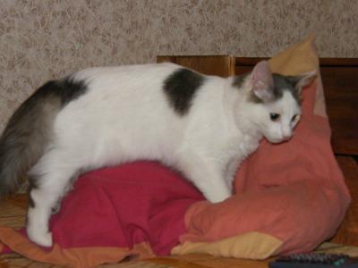 Чем кормит кота чтобы он набрал вес в домашних условиях
