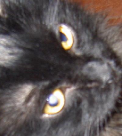 У кота белое пятно на глазу