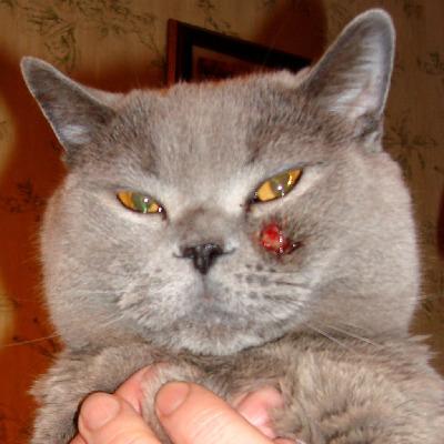Изменения в поведении кота