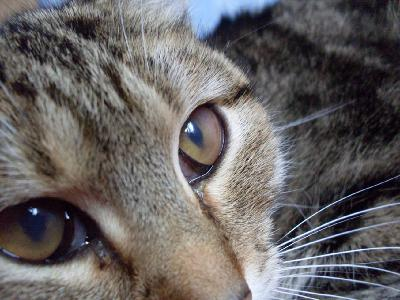 Увеличенный глаз у кота