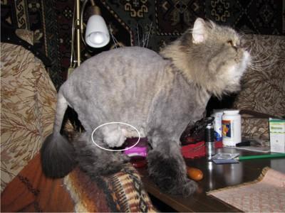 которые у кота урчит в животе что это любой браузер