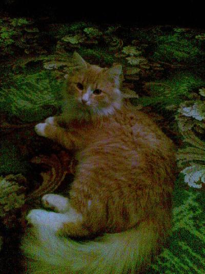 Кот изнасиловал кошечку