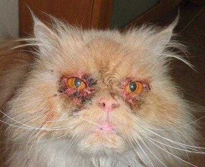 проблемы с суставами у котов