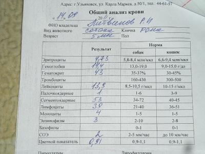 Общий анализ крови своими руками