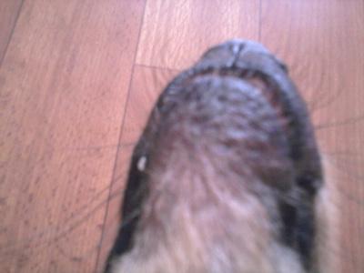 Облысение вокруг глаз собакам