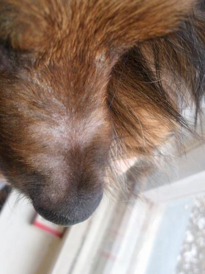 Почему у собаки зимой лезет шерсть