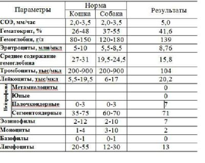 Норма тромбоцитов у беременных 3 96