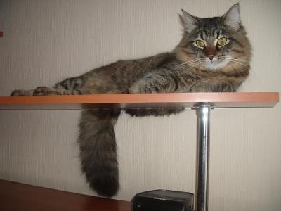 Моча у кошки коричневого цвета