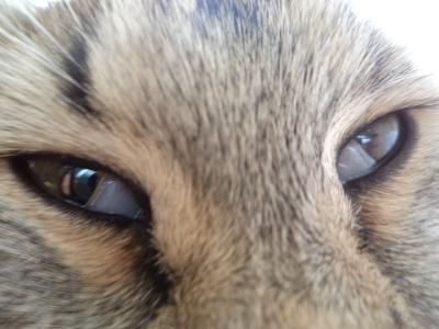 Пленка в углу глаза у кота