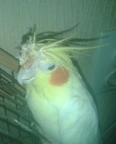 У попугая нос красный