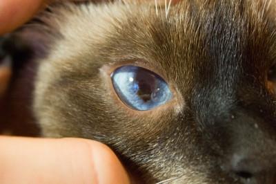 Белая пленка в углу глаза у кота