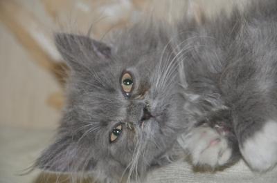 Если у котенка сопли и чихает что делать в домашних условиях