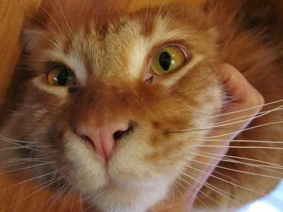 У кота в глазах черные выделения