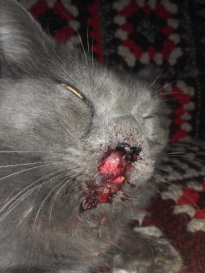 Падение кота с 5 этажа