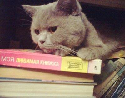 Что делать если кот не наедается