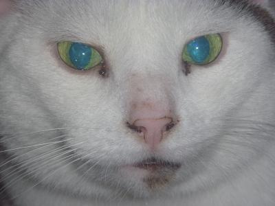 Белые выделения из глаза у кота