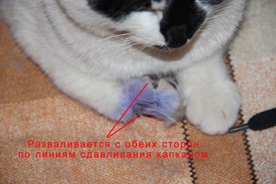 Задняя лапа у кота висит