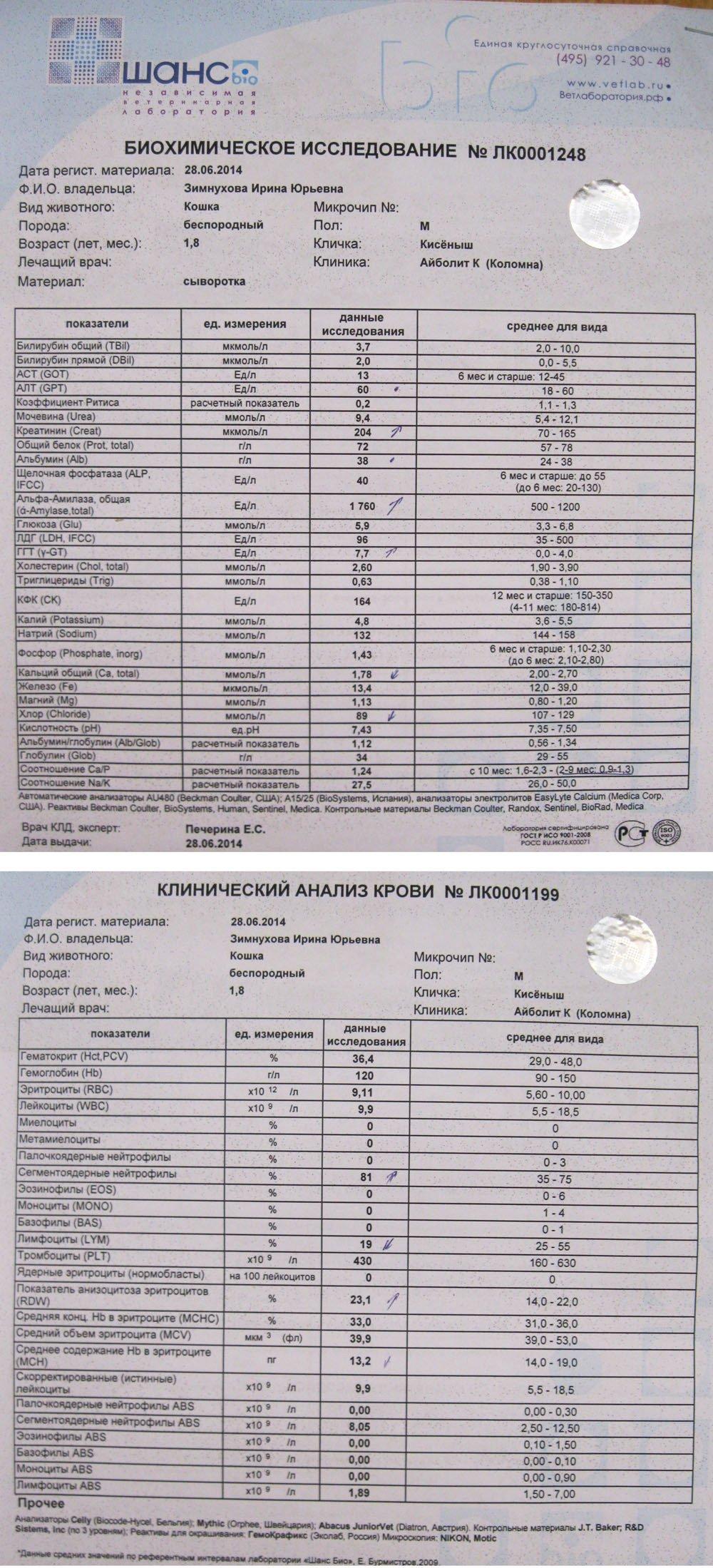 Результаты клинического анализа крови 13 фотография