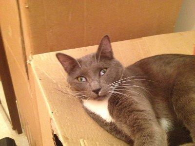 Кот закрывает один глаз фото