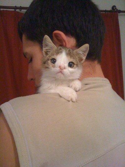 Кот в 2 месяца фото