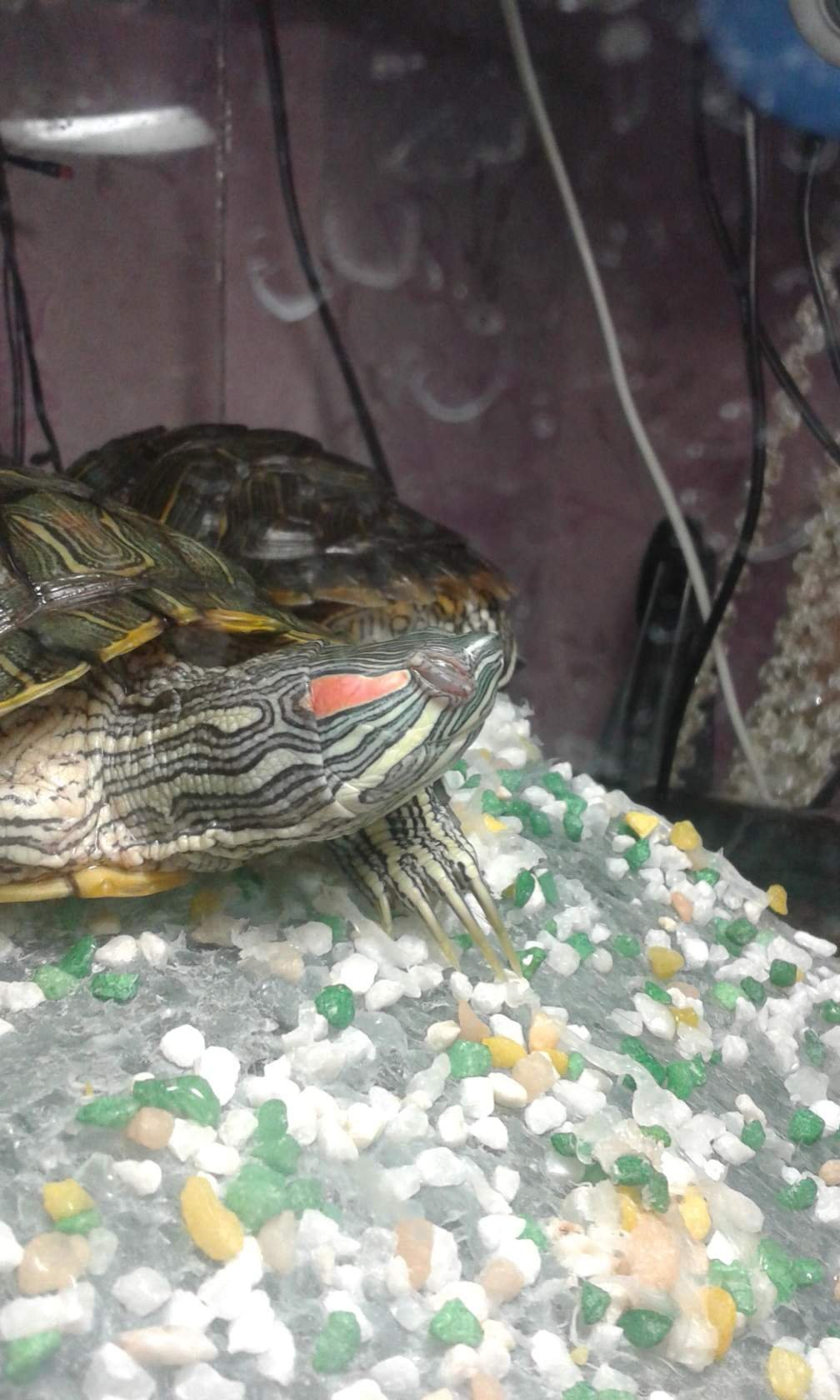 Подсветка для черепахи своими руками