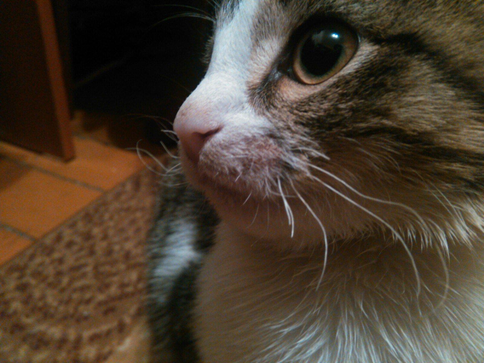 Рост усов у котов