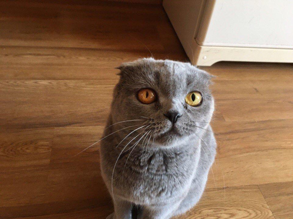 У кота разные зрачки