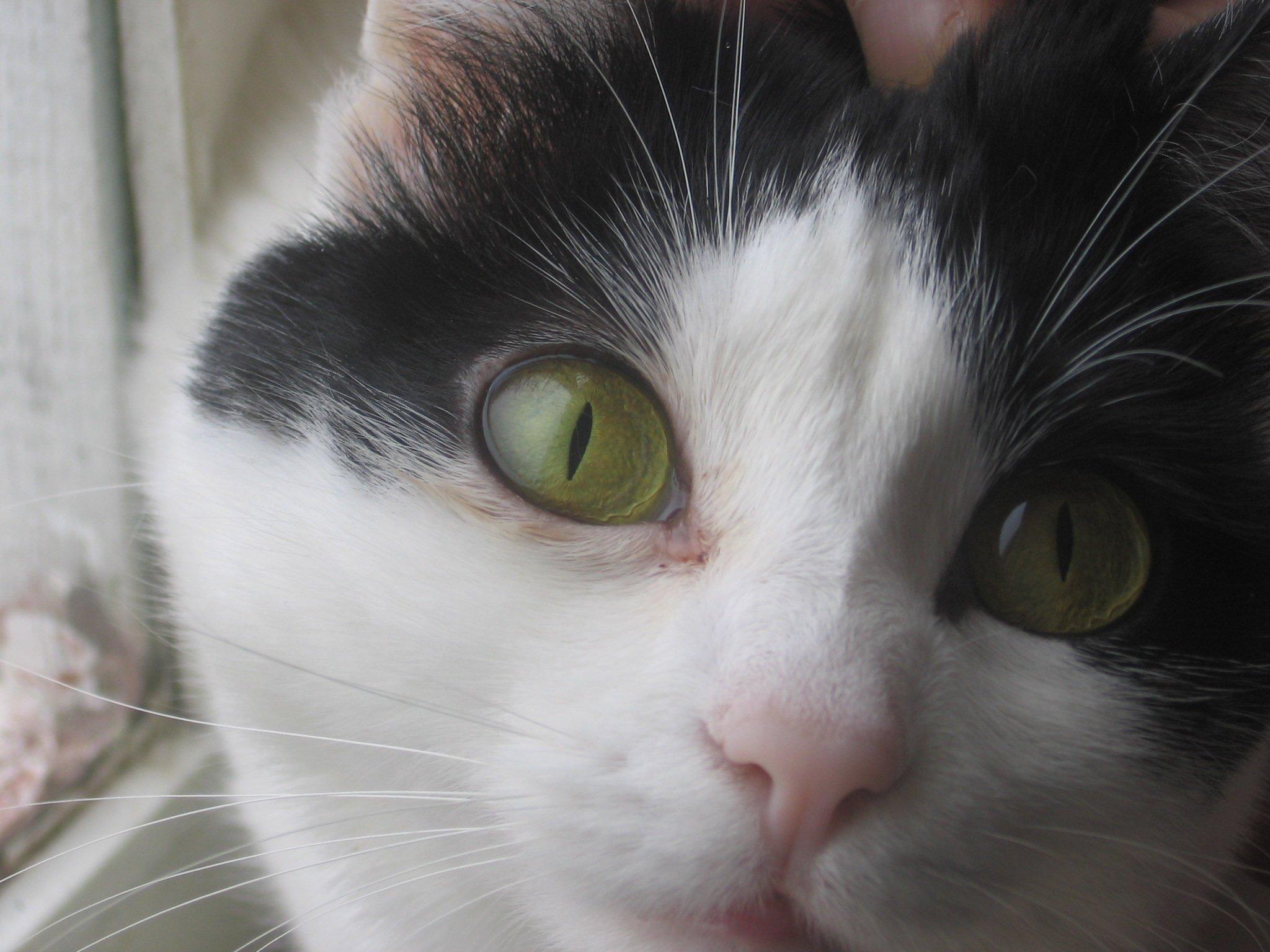 У кошки слезятся глаза что делать в домашних условиях 753