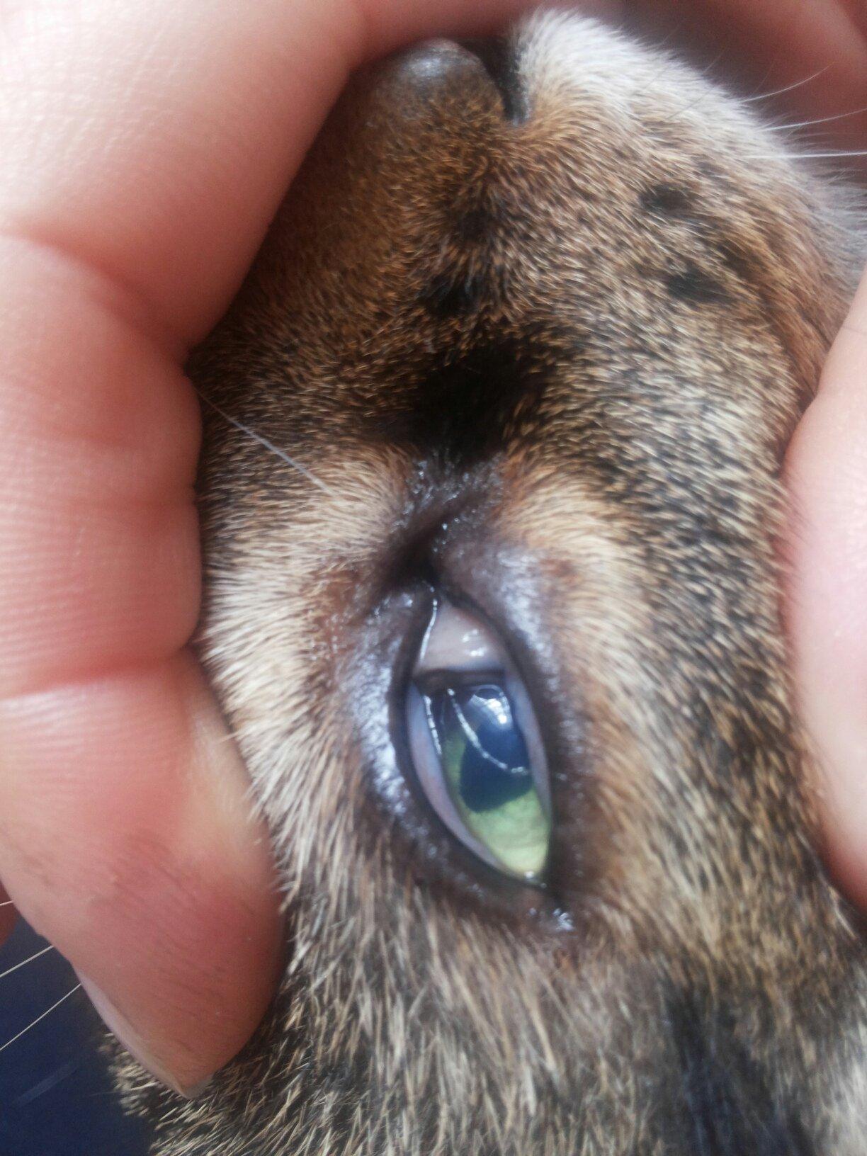 У кошки слезятся глаза что делать в домашних условиях 127