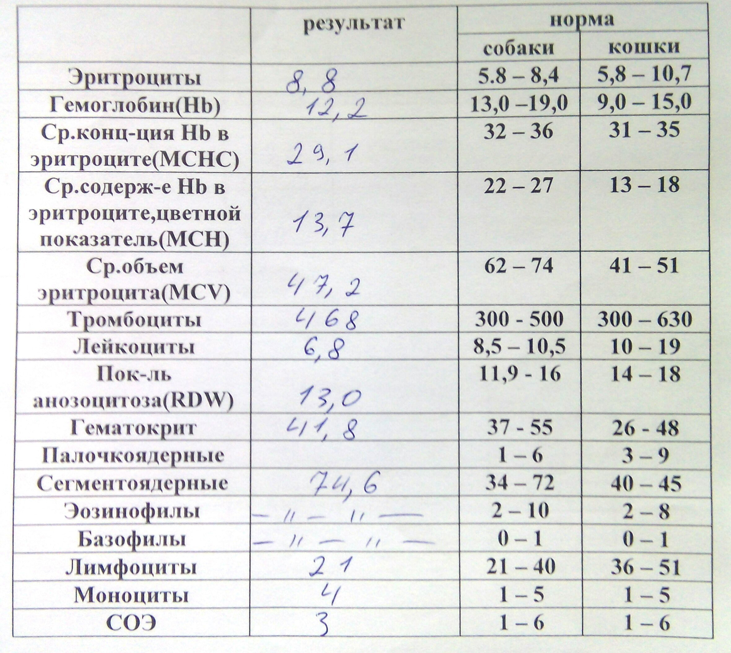 Лейкоцитов 500 в моче у кота