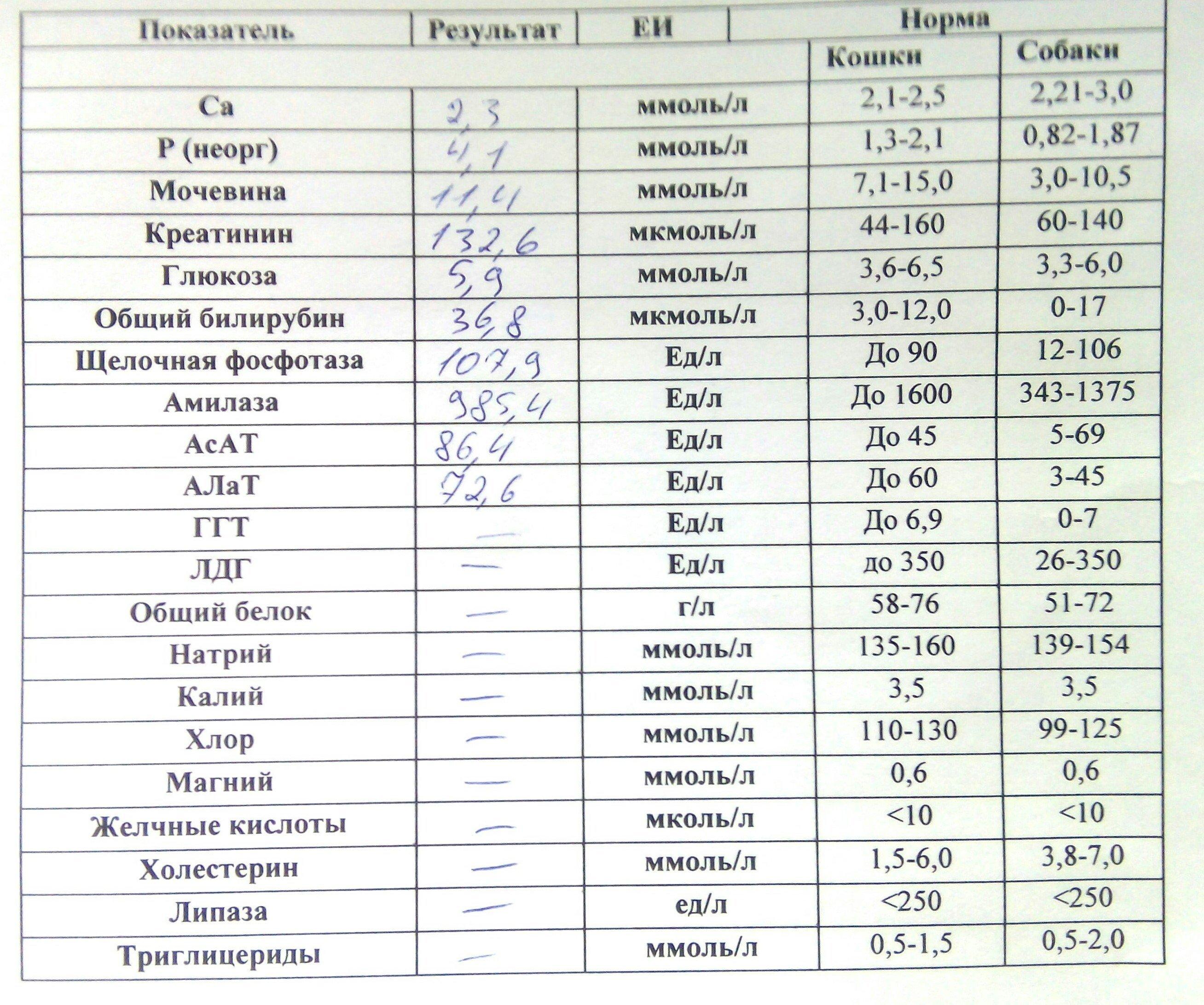 Биохимический анализ крови для печени расшифровка норма
