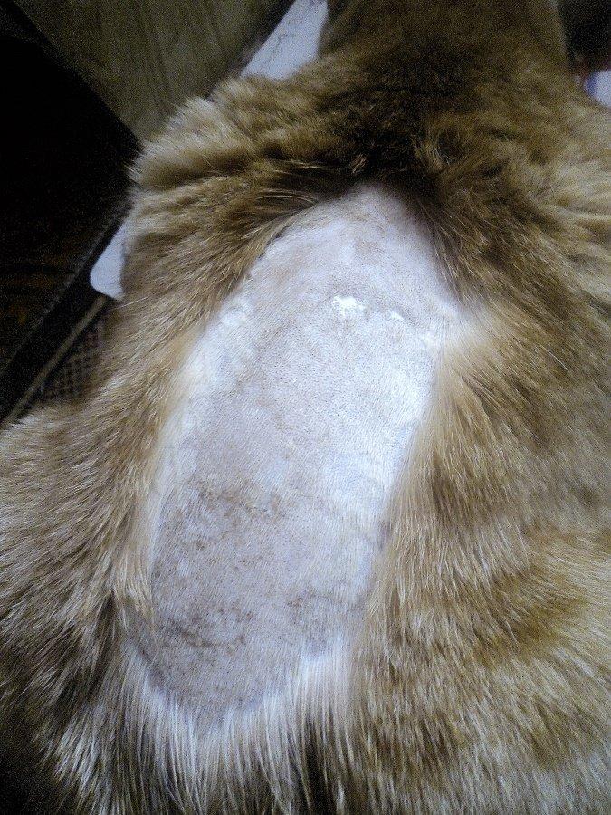 У кота на боку выпала шерсть