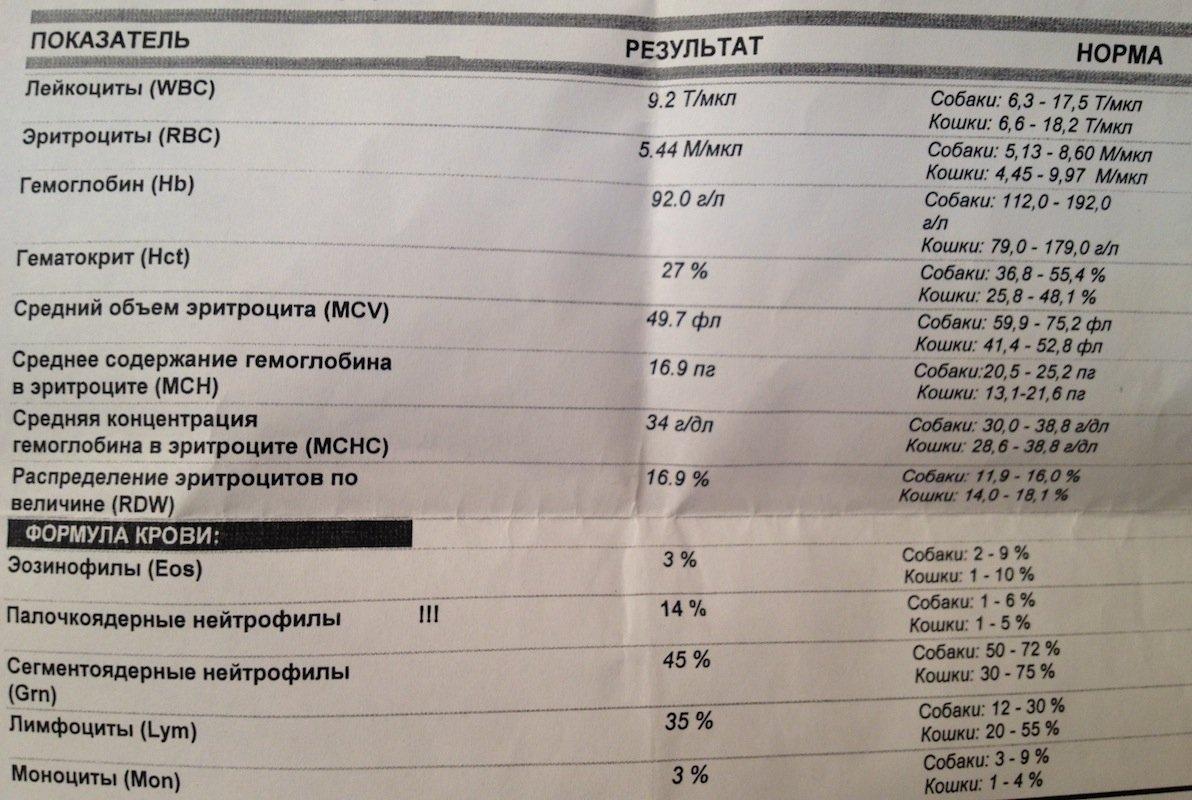 Уровень тромбоцитов норма у беременных 19