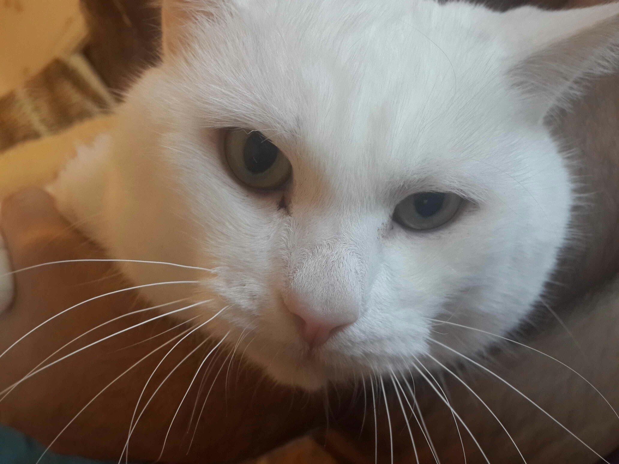 Выделения из глаз у кота что делать