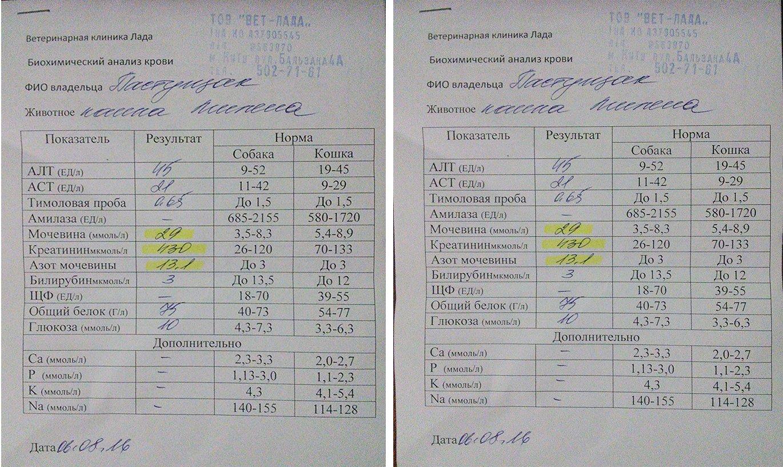 Общий анализ крови - свидетель нарушений в организме 88