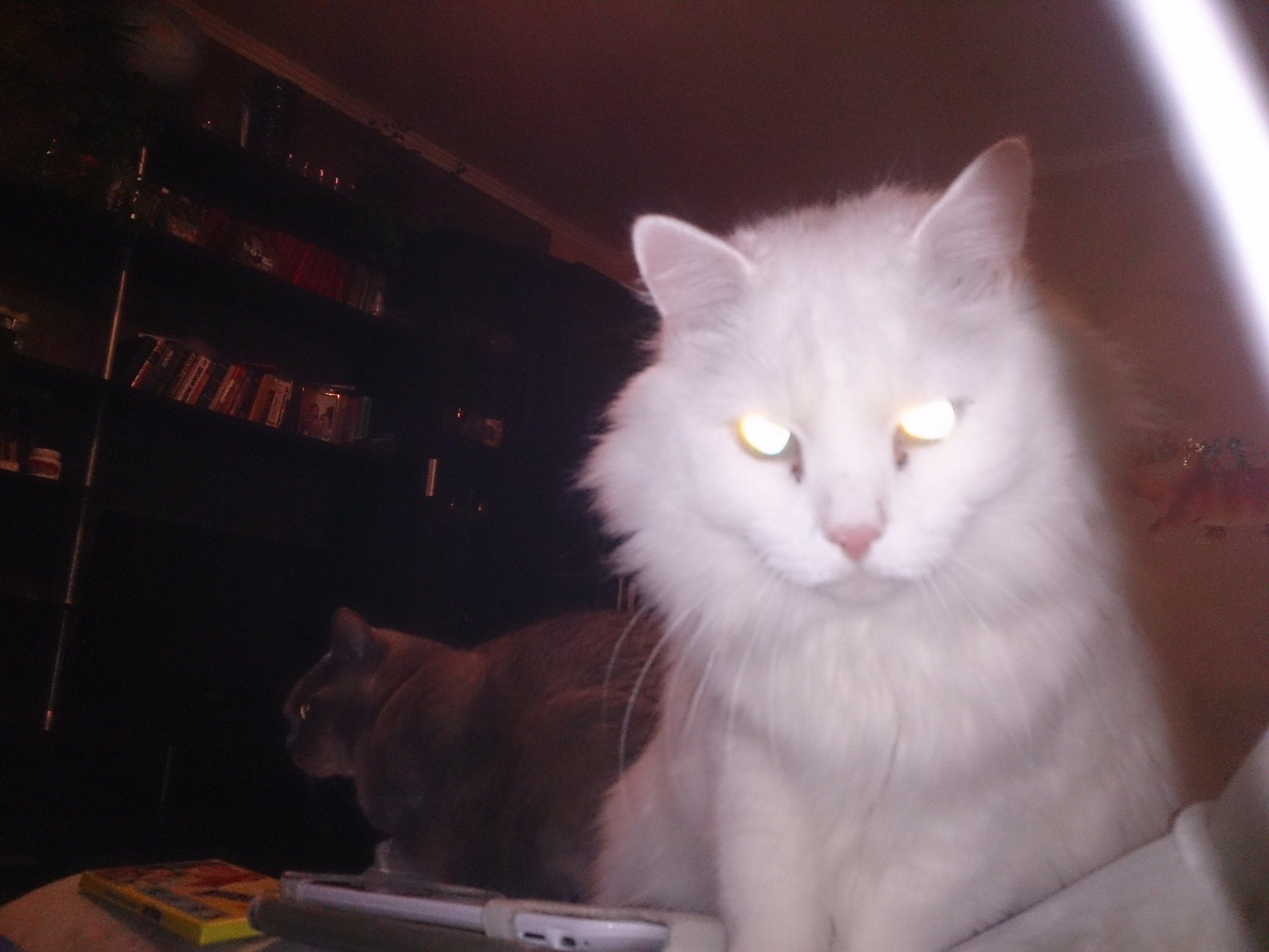 Кот с хпн сколько проживет