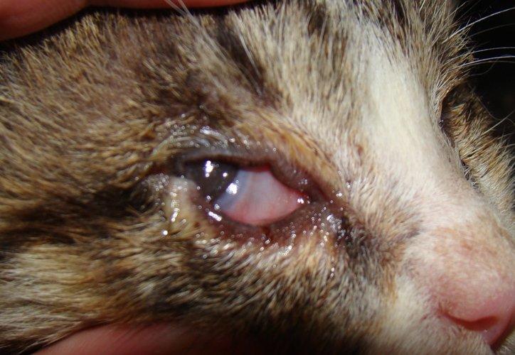 У кота не видно глаз
