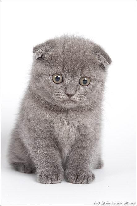 Симпатичные котята и щенки