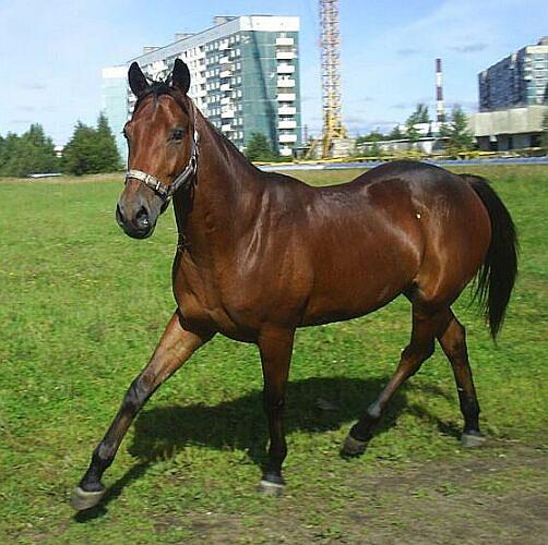 Ведь лошади тоже домашние любимцы.  Фото прислала Марина Артёменко.