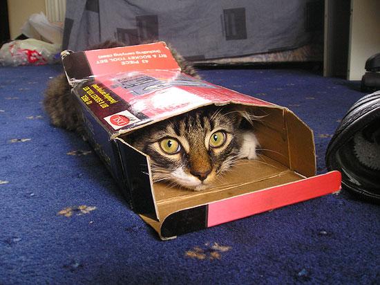 Кот - люитель экстрима. Фото прислала Лариса Петкова.