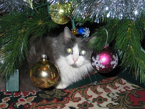 Лучший ваш подарочек - это я!   Фото прислала Лариса.