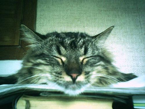 На фото наш кот Чижик (9 месяцев, найденыш, порода: чистокровный дворянин:-)   Фото прислала Мария Власова
