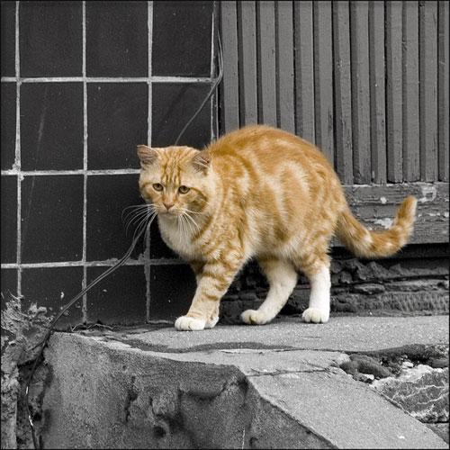 Рыжий кот в городке Одинцово-10. Фото: А.Мочалов