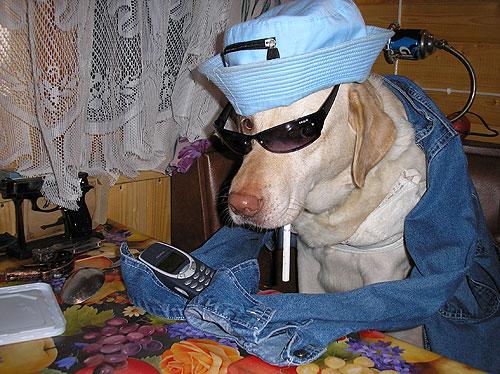 Мобильник и очки. Фото прислала Тигра