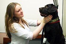 Вызов ветеринарного фельдшера на дом