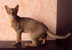 У кошки увеличились зрачки пищевое