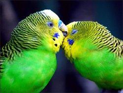 ДОМАШНИЕ ПТИЦЫ Увиденные во сне домашние птицы говорят о